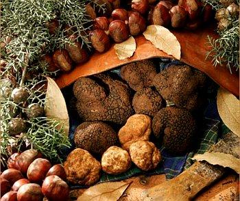Il Tartufo in Cucina, workshop della Regione Campania