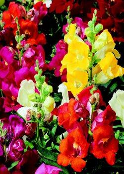 Gli affascinanti segreti delle piante a citt della for Piante dello stagno