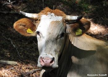 Futuro Associazione Allevatori Campania: l'ottimismo di Confederdia