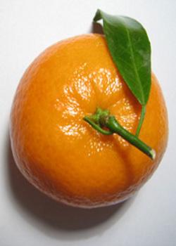Mandarino200Sxc426660_77264322