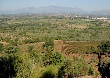 L'Appello delle Città del Vino ai candidati a parlamento e governo: Tutelare l'Agricoltura di qualità