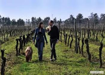 Da Villa Matilde nasce Deìra, passito da uve di Aglianico Roccamonfina Igt: le prime 700 bottiglie dopo 7 anni di affinamento