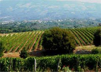 Domenica è la giornata nazionale dell'Agriturismo,le iniziative in tutta Italia di Turismo Verde-CIA