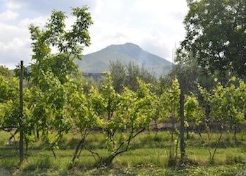 Escursione in Bici lungo l'Ager Capuanus tra cultura e agricoltura