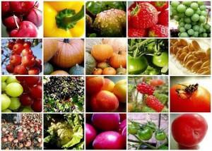 Alma Seges a Fruit Logistica
