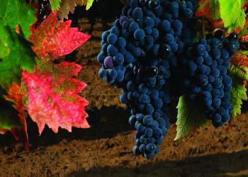 Un Vespa Tour lungo le vigne di Posillipo
