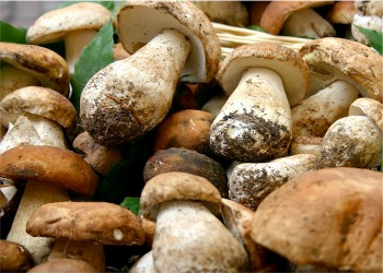 Sagra dei funghi saltata, a Cusano Mutri i ristoratori puntualizzano