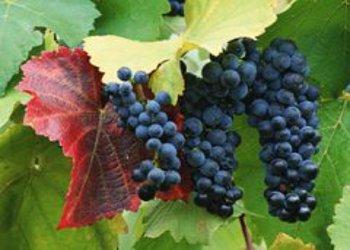 La Presentazione del Casavecchia Wine Festival di Pontelatone