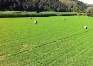 In crescita i furti di trattori negli allevamenti europei