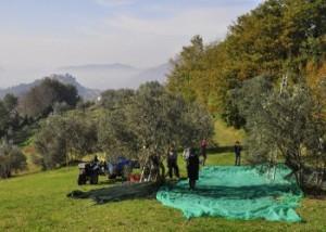 Il Movimento Turismo del Vino pensa all' Olio