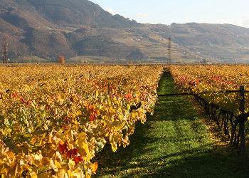 """Presentato al MIPAAF """"l'Atlante dei territori del vino italiano"""""""