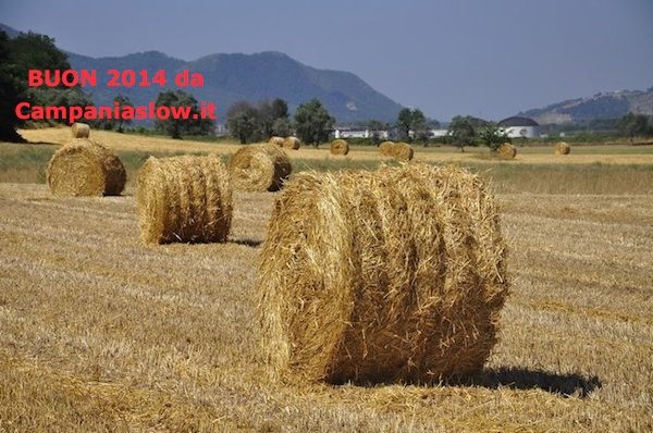 Un Augurio di Buon 2014 alla Campania, ai suoi agricoltori e ai tanti appassionati che difendono la terra