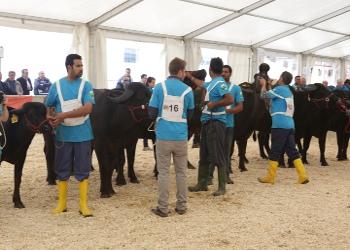 A Fiera Agricola i Vincitori della Mostra Nazionale della Bufala Mediterranea