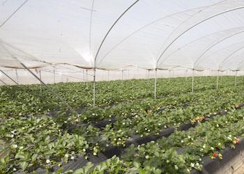 Cambia il DG Agricoltura in Regione, gli auguri  di Alleanza Cooperative a Mariella Passari