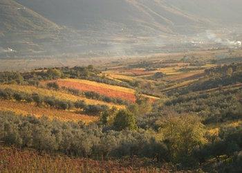A Castelvenere confronto tra falanghina, Barbera del Sannio e i vitigni storici italiani