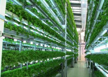La serra in casa, rivoluzione idroponica dalla Danimarca
