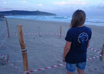 Sulle spiagge di  Palinuro anche la Tartaruga Caretta Caretta