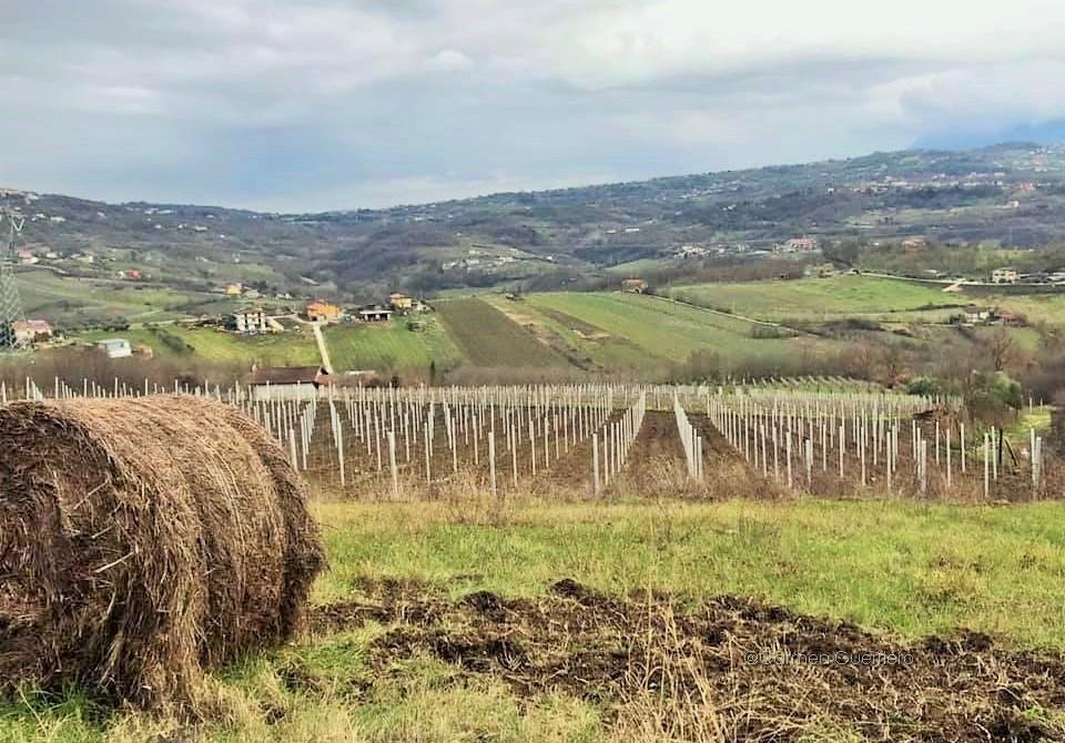 Vino-in-Italia