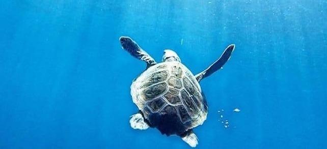 Apre al pubblico il centro ricerche tartarughe marine e osservatorio del Golfo a Portici