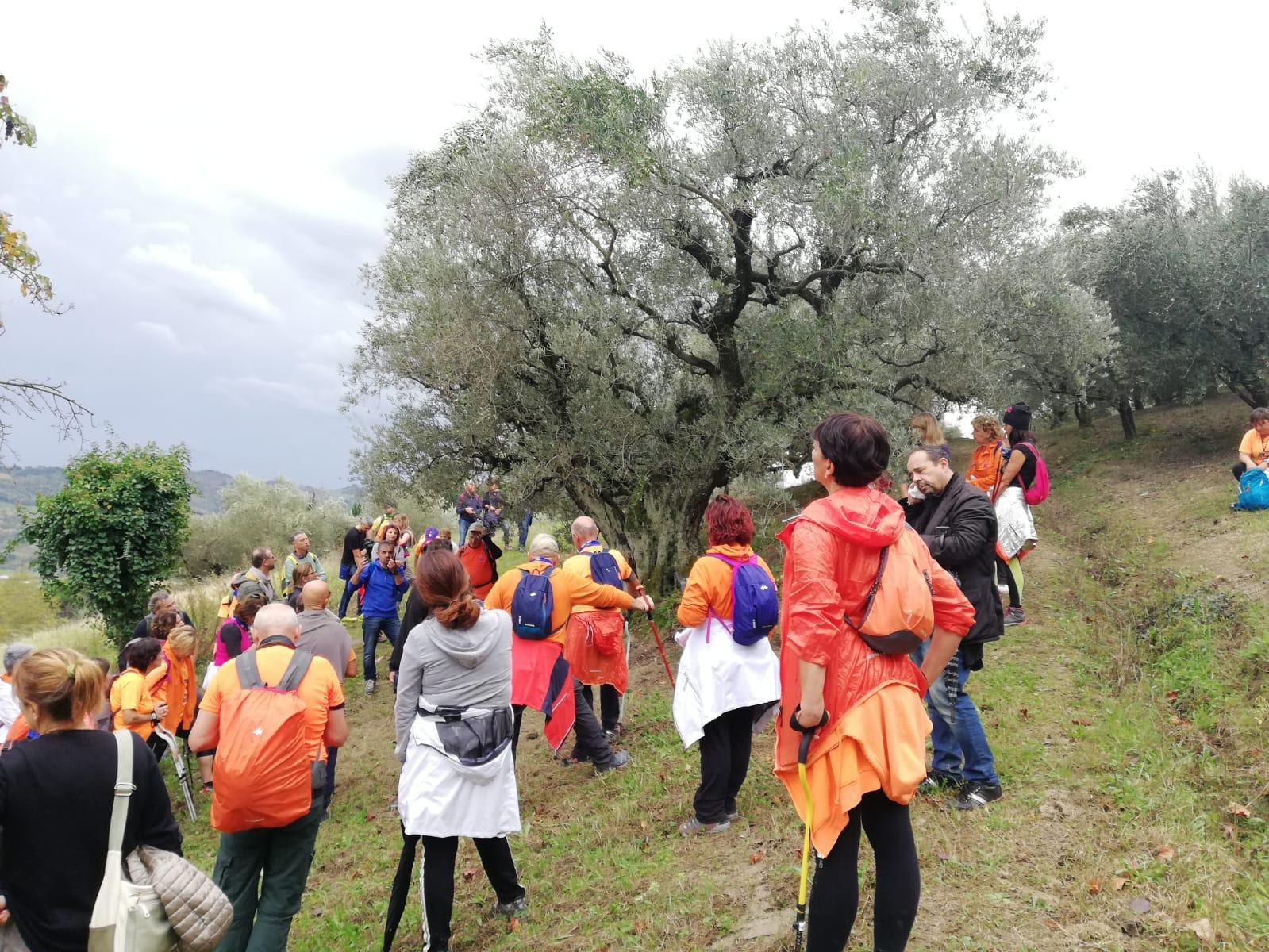 Camminata tra gli olivi in Campania, scopri dove