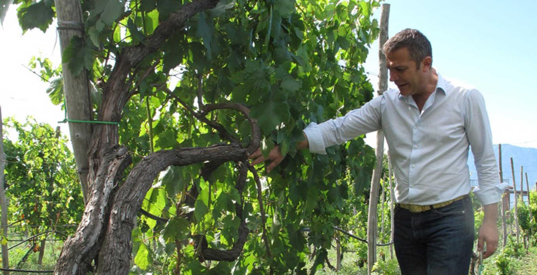 In attesa di andar per vigne…Home Wine Tasting con Casa Setaro