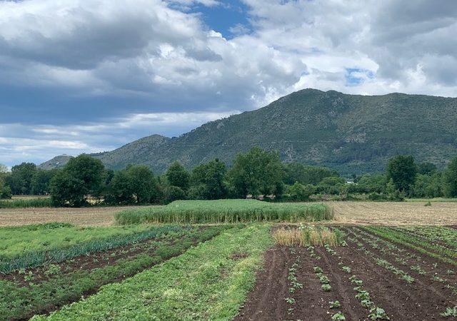 Capitali della Campania Felix, l'agricoltura vista da  Pietravairano