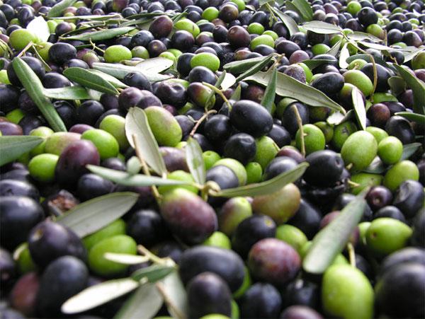 Evo&Eva un premio internazionale per l'olivo nella cosmesi