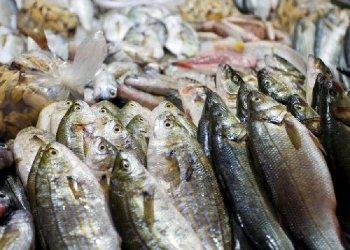 Digital Seafood, la Campania partecipa alla fiera online