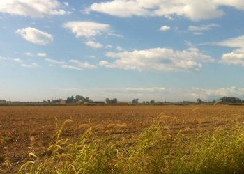 Banca delle terre agricole, in Campania 20 terreni in vendita sul portale Ismea