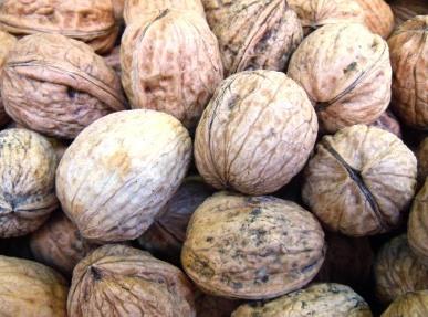 Presidi Aperti con Slow Food, ecco i luoghi della Penisola Sorrentina