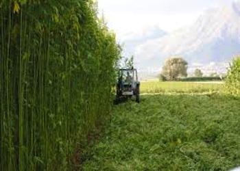 Workers Buyout a Montesarchio con la Canapa per bioedilizia e la Regione Campania