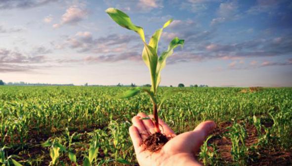 Parco Progetti per Agroalimentare, Agrocepi sollecita Patuanelli