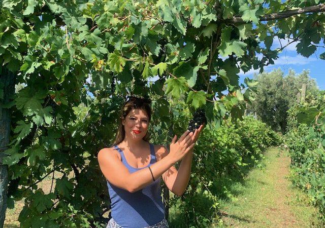 Sono Green i giovani imprenditori vitivinicoli italiani