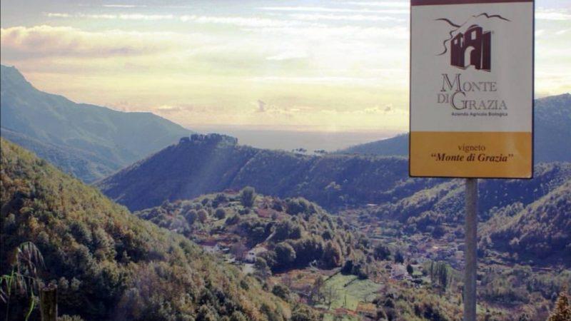 Monte di Grazia a Tramonti, antropologia attraverso il vino