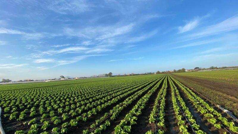 Estorsioni in agricoltura  Giugliano, l'intervento della Regione
