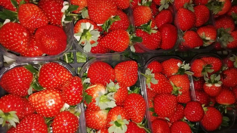 Boom fragole in Campania, aumenta la superficie coltivata