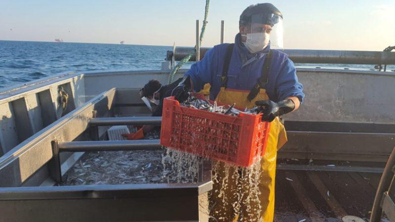 Tesi universitarie sulla  Pesca, il premio Legacoop Agroalimentare
