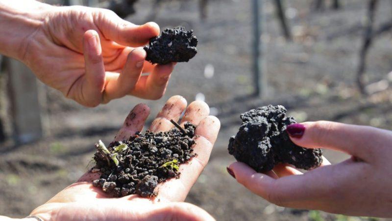 Humus di lombrico per dare sostanza organica ai Vini  del Vesuvio